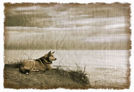 Old photograph of wild dog on a textured card, in grunge style. Film grain. photo