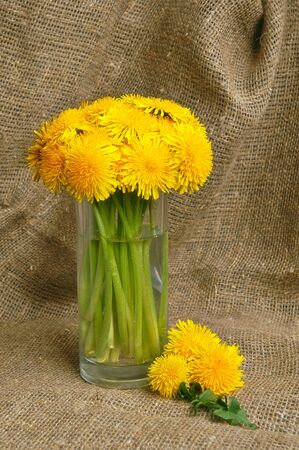 Bunch of dandelions in glass vase on canvas background photo