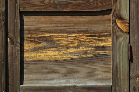 Beautiful wood texture close-up photo