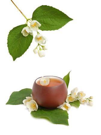Green jasmine tea with fresh jasmine flowers. photo