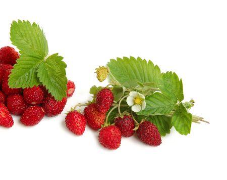 Wilde aardbeien plant met groene bladeren, rode en groene bessen op witte achtergrond  Stockfoto - 3407571
