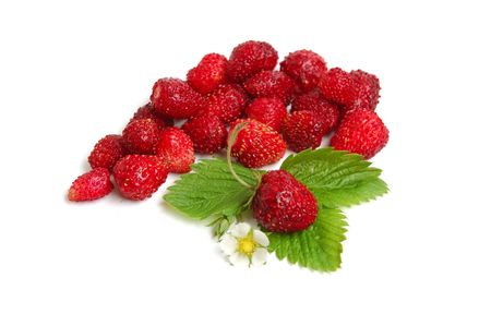 Wild strawberry plant with green leaves and flower