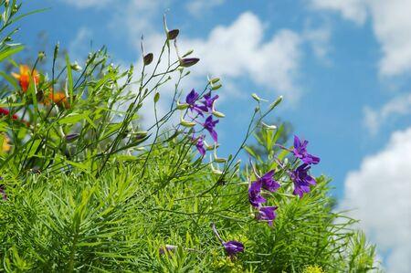 Summer wild flowers in meadow over sky. Selective focus. photo
