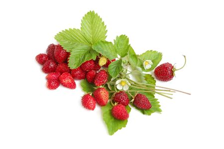 wild strawberry: Wild strawberries plant with green leaves, flower, red and green berries on white background