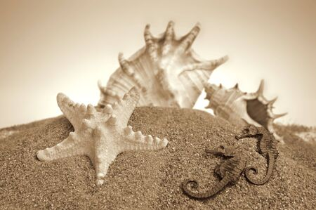 coquina: Marinas sobre un fondo de arena Foto de archivo