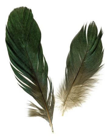 poetic: Two raven feathers on white background Stock Photo