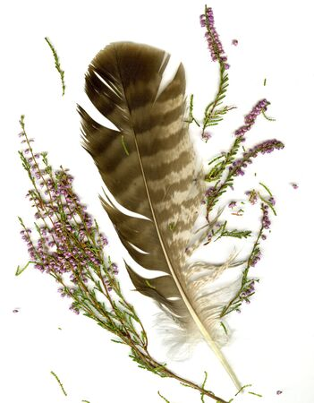 Heather bouquet and falcon plume on white background photo