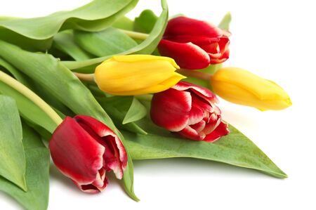 Colored spring tulips on white background photo