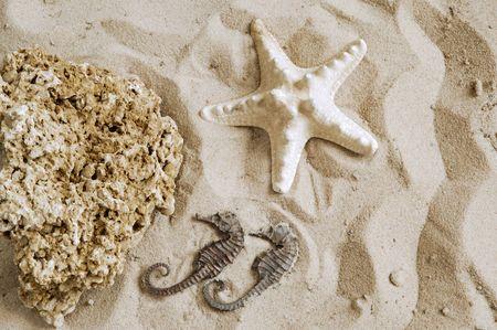coquina: Starfish, hipocampo y la Coquina de roca en la arena de fondo