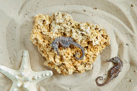 coquina: Starfish, hippocampus and coquina rock on sand background Stock Photo