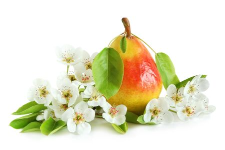 Yellow pear with green leaves and flowers on white background