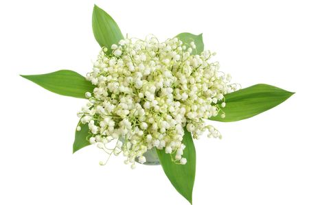 Bunch of lily of the valley on white background photo