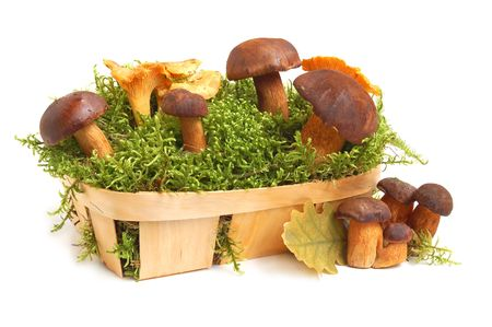 King boletus mushrooms and chanterelles bunch with green moss in a basket on white background photo