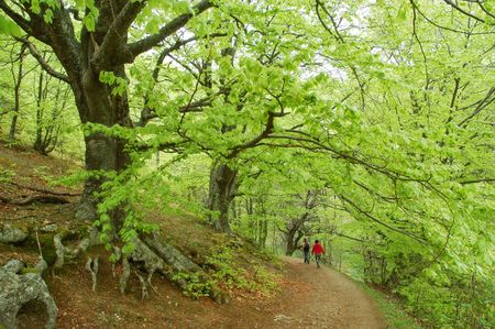 2 way: Couple walking on footpath through mysterious beech forest Stock Photo