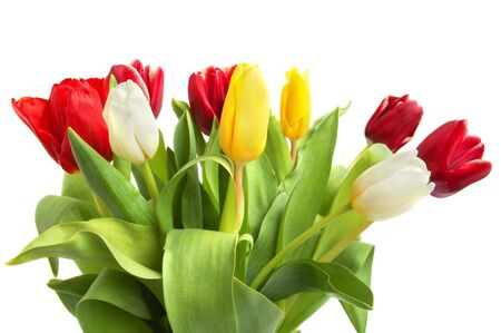 Colored spring tulips on white background Stock Photo - 6179007