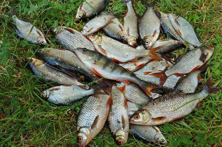 Catching fish on green grass Stock Photo - 6179221