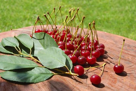 Sweet and juicily cherries heap on a tree background. photo