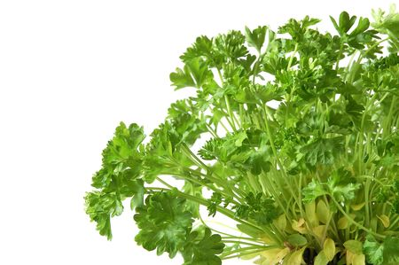 Gardening parsley tree in small pot on white backgroundin photo