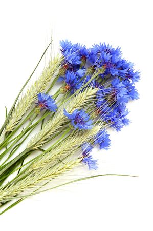 wild oats: Bunch of cornflowers and green cereals on a white background Stock Photo