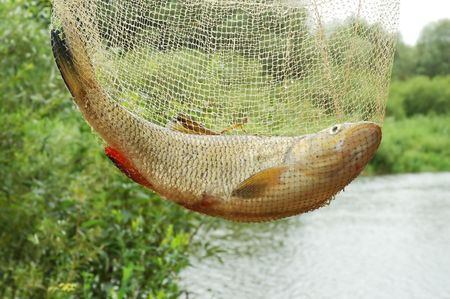 Catching fish in fishing net on a beautiful river background photo