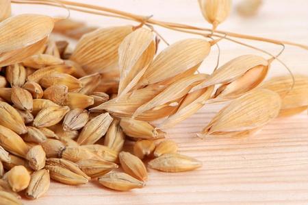 avena: Tallos de avena con semillas sobre un fondo de madera