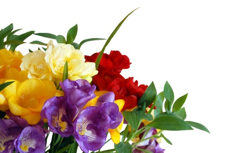Color freesias with space for copy on white background Stock Photo