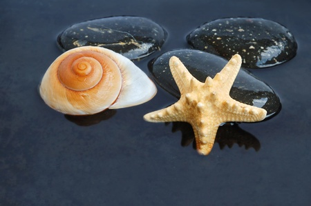 Seashell and starfish on stone on black water background photo