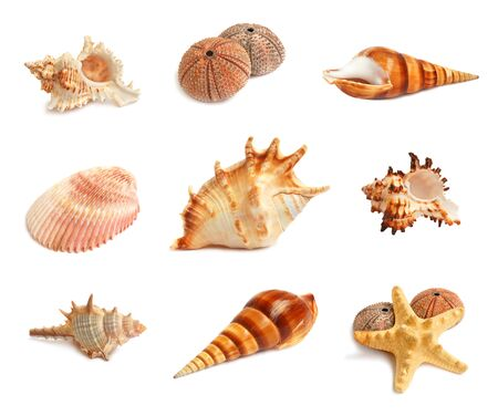 urchin: Set of seashells, starfish and echinus on a white background