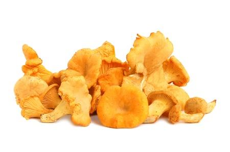 Autumn chanterelles mushrooms on a white background
