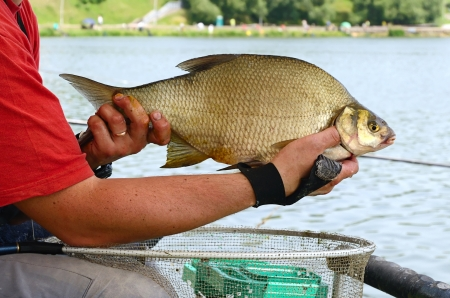 Fisherman holding a big bream catching in river photo