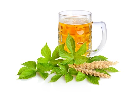 single beer: Mug of fresh beer with hop leaves and cereals on a white background