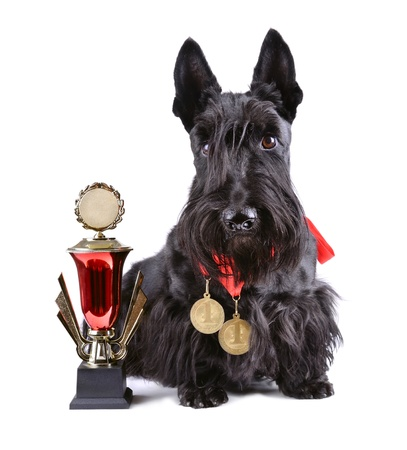award background: Scotch terrier with gold cup and medals on a white background