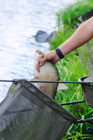Fisherman holding a big bream catching in a river photo