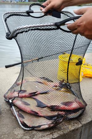 fishingline: Fisherman with fishing net full of big breams