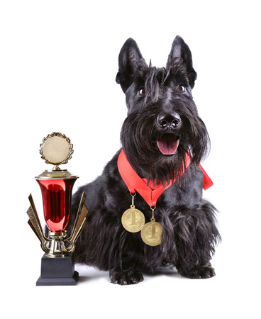 Winner dog with cup and gold medals on a white background photo