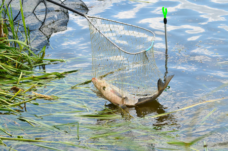 fishingline: Fishing trophy in a net catching from river Stock Photo