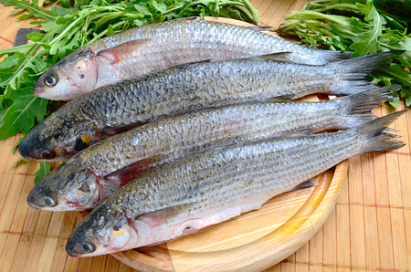 grey mullet: Fresh sea grey mullet with green rocket leaves ready to cooked