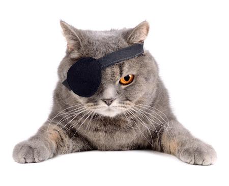 Gato británico en traje de pirata del Caribe con el parche en el ojo Foto de archivo - 25354385