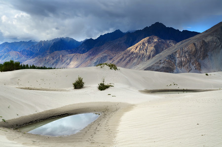 high desert: Oasis in desert in Nubra valley in Ladakh, India Stock Photo