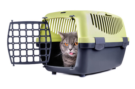 Angry gray cat looking from plastic cage on a white background photo