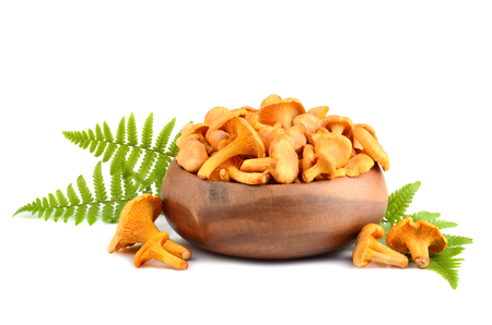 chanterelle: Yellow chanterelles mushrooms in bamboo plate with green fern leaves on a white background Stock Photo