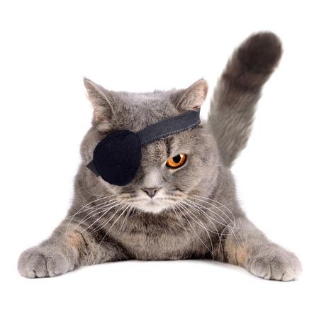 Gatto britannico in costume da pirata dei Caraibi con benda sull'occhio Archivio Fotografico - 29862956