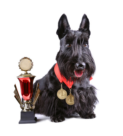 Winner black dog with cup and gold medals on a white background photo