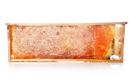 Honey in honeycomb isilated on white background Stock Photo