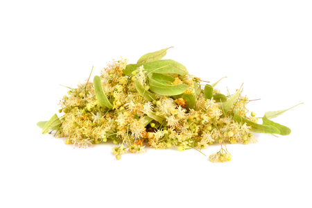 Linden flowers isilated on white background