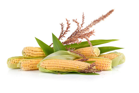 Ripe corn cobs with flowers on white background Stock Photo