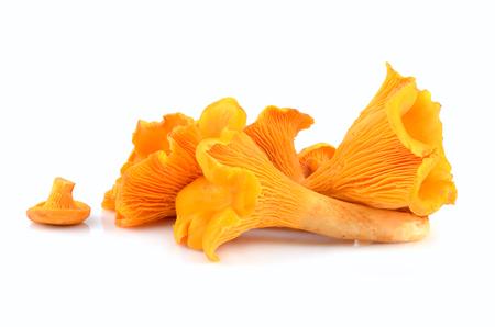 Yellow chanterelles mushrooms on a white background Foto de archivo