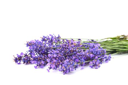 Beautiful blossoming lavender closeup on a white