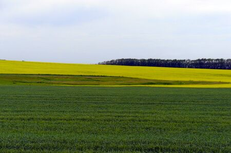 non cultivated: Green fields and yellow fields Stock Photo
