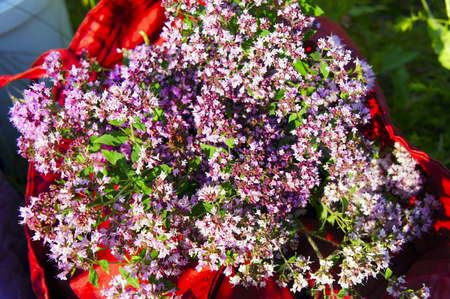 wild marjoram: The bouquet of oregano closeup